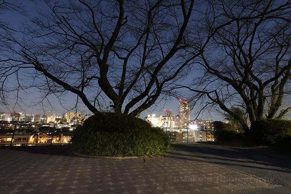 夜景スポット いろは坂さくら公園の雰囲気